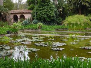 lotusland_pond_600x