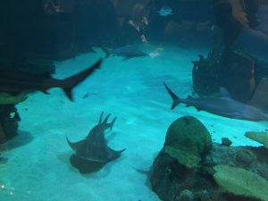 Lunch with the sharks 9-1-2015