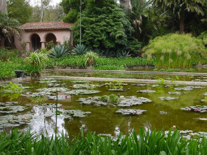 lotusland_pond_600x