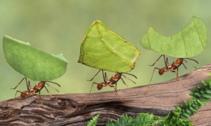 pictures-of-ants25